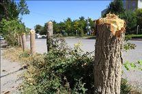 قطع غیرقانونی درختان به صورت ویژه پیگیری می شود