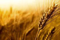 قیمت پیشنهادی 2868 تومانی گندم برای سال زراعی جدید