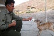 برای نجات حیات وحش لطفا شما هم محیط بان شوید