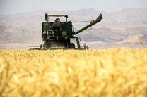 تولید 5800 تن گندم و جو در نوشهر