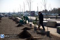 شهروندان قمی همزمان با روز درختکاری نهال دریافت کنند