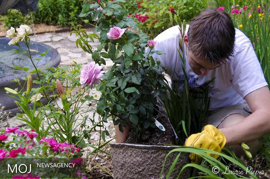 ارزانترین روش ازدیاد گل و گیاهان زینتی از طریق کاشت بذر است
