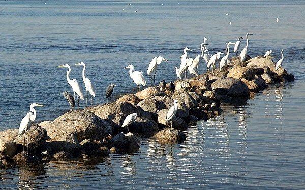 آغاز کوچ پرندگان مهاجر به زیستگاههای هرمزگان