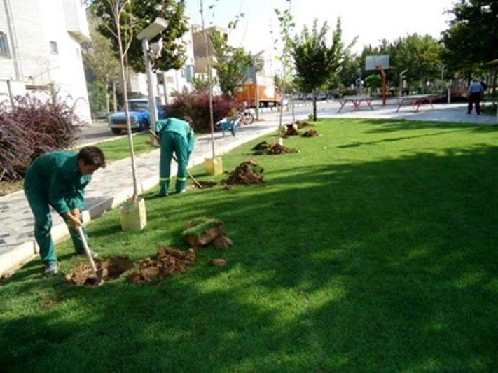 طرح جامع فضای سبز شهر بندرعباس تدوین می شود