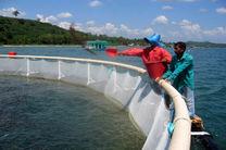 طرح پایلوت پرورش ماهی کپور دریایی در مازندران آغاز شد