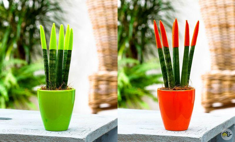 بهترین گل های آپارتمانی برای تصفیه هوای خانه/کدام گیاهان هوای خانه را تصفیه می کنند؟