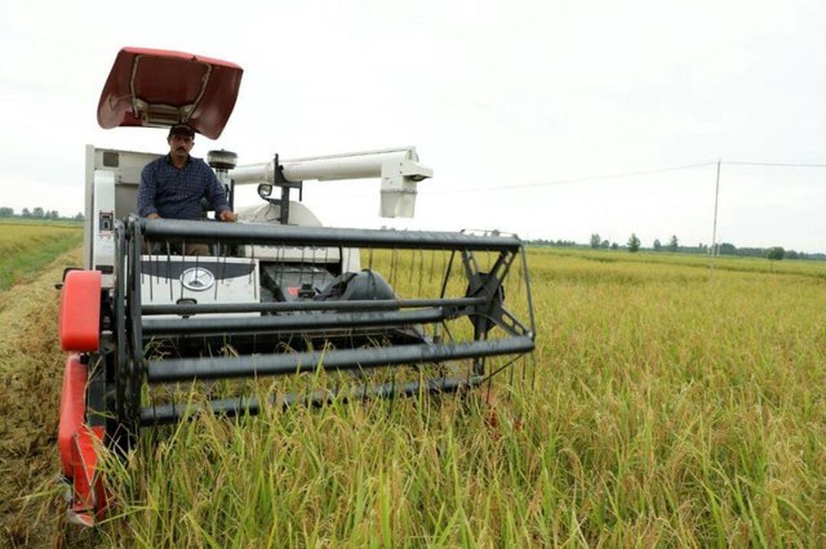 افزایش 5 درصدی برداشت مکانیزه برنج در جویبار