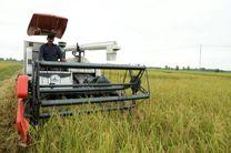 تولید 80 هزار تنی برنج در بهشهر