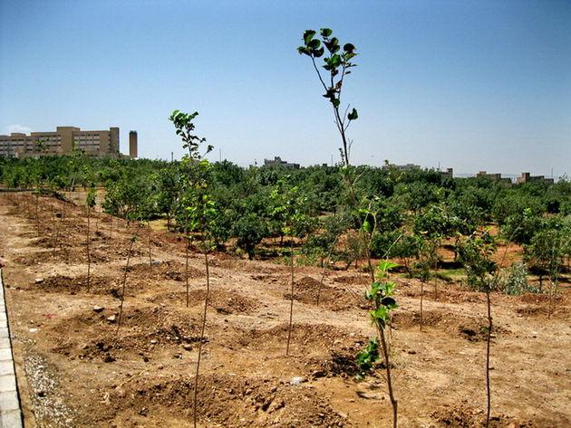 تولید ۴۰۰ هزار اصله نهال جنگلی