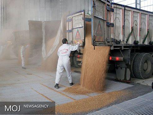 خرید تضمینی گندم در منطقه ۲ از مرز یک میلیون تن گذشت