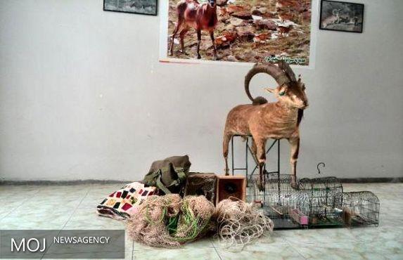 دستگیری ۴ متخلف شکار غیر مجاز در ازنا