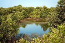 جنگلهای حرای قشم از هجوم ملخ ها در امان است