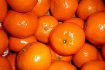 قاچاق نارنگی پاکستانی به دلیل عدم اجازه واردات این محصول از سوی دولت بود/چغاله بادام کیلویی 80 تا 100 هزار تومان