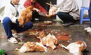 خرید مرغ و تخم مرغ از مراکز غیر معتبر ممنوع