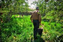 لزوم توسعه باغات در کشور