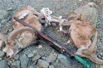 صدور حکم قضایی برای متخلفان شکار چهار کل وحشی در شهرضا