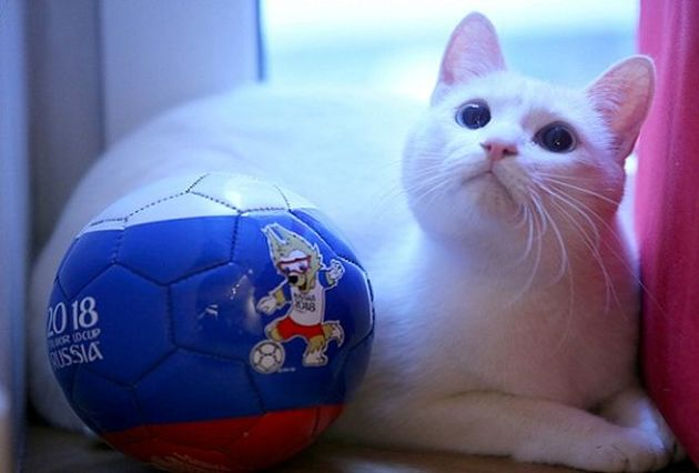 پیشگویی گربه روسی از بازی سوئیس و سوئد/ سوئیس پیروز این بازی است