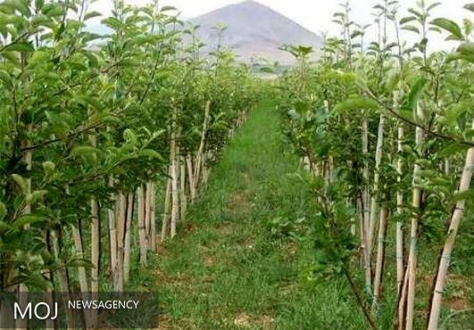 ۸۴ طرح کشاورزی در لرستان به بهرهبرداری میرسد