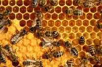 تولید سالانه بیش از 1900 تن عسل در بابل