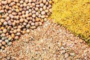 پلمب یک کارگاه غیرمجاز تولید خوراک دام تقلبی در اصفهان / کشف 3 تن خوراک دام تقلبی