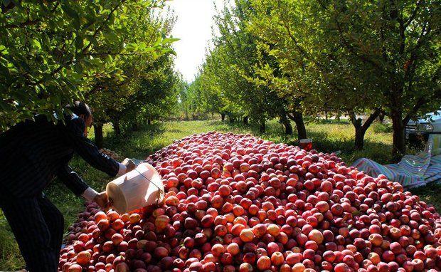 تولیدات باغی کردستان به 350 هزار تن رسید