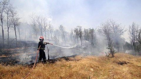 پوششگیاهی مناسب امسال، خطر حریق جنگلها را دوچندان میکند
