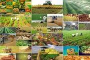 رشد 33 درصدی طرح های کشاورزی و دامپروری در استان اصفهان