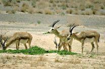 کودکان دوستدار محیط زیست در اصفهان  پول قلک خود را نذر آهوان پارک ملی کلاه قاضی کردند