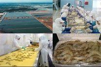 تولید میگو تا ۶۰ هزار تن افزایش مییابد