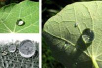 استفاده از سطوح فوق آبگریز راهی برای کاهش اصطکاک