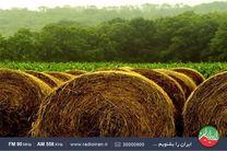 ایران امروز کمبود علوفه در کشور را بررسی می کند