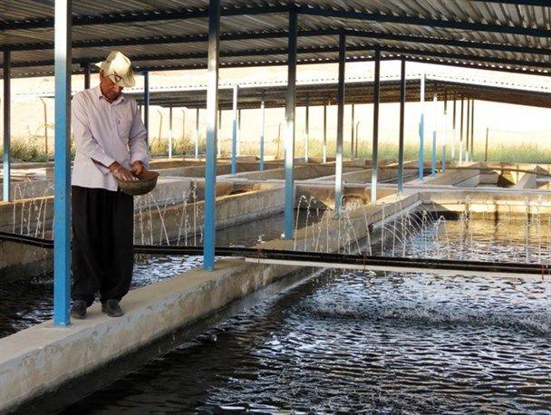 برداشت موفقیتآمیز یک و نیم تن ماهی خاویاری در هرمزگان
