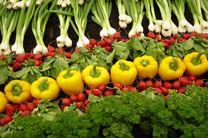 دولت هیچ گونه حمایتی از کشاورزی ارگانیک نمیکند / بی توجهی به کشاورزی ارگانیک بی توجهی به فرمایشات رهبری است