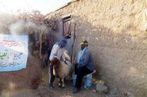 واکسیناسیون ۱۲ هزار و ۹۰۰ راس دام سبک در روستاهای پلدختر