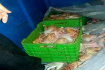 توقیف یک تن مرغ غیربهداشتی توسط پلیس راه دره شهر ایلام