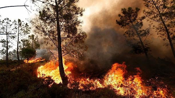 انسان، عامل بیشتر آتشسوزیهای جنگلی در آمریکا