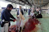 تعطیلی کشتارگاه شهرداری در صورت رعایت نکردن الزامات/ مردم از گوشتهای برچسب دار استفاده کنند