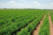 کشاورزان از کشت محصولات پرمصرف آب خودداری کنند