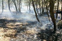 آتش سوزی در ارتفاعات گنو بندرعباس مهار شد