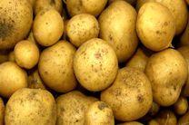 سو مدیریت در صادرات محصولات کشاورزی بازار را به هم ریخت