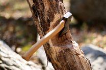 قطع درخت بدون اجازه شهرداری ممنوع است