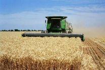 گندم کاران بروجردی در انتظار پول گندم هستند / پرداخت فقط ۱۰ درصد بهای گندم