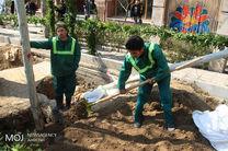 ۴۰۰۰ درخت خطر آفرین در سطح شهر ساماندهی و ایمن سازی شدند
