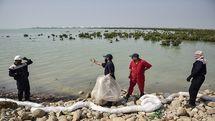 پاکسازی سواحل قشم از لکههای نفتی با کمک گروه های مردمی