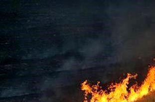 آتش زدن کاه در شالیزار قابلیت پیگرد قانونی دارد