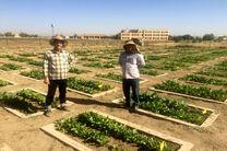 تلاش در معرفی ارقام جدید چغندرقند توسط مرکز تحقیقات، آموزش و ترویج کشاورزی استان همدان