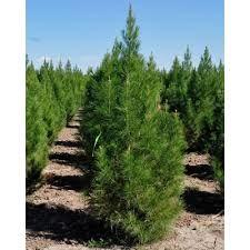 ۱۰۰۰ اصله درخت در خیابان های مهریز کاشته شد