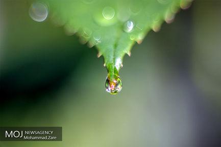 قطرات+آب+سوژه+های+زیبایی