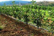 دولت برای کشاورزان متقاضی آبیاری قطره ای تا 85 درصد به صورت بلاعوض تسهیلات پرداخت می کند