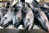 اجرای طرح توزیع ماهی دربندرلنگه
